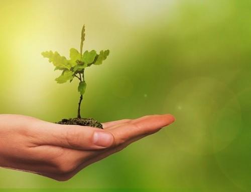 Técnicas Corporales para Terapeutas -Bioenergética-